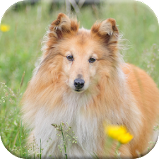 Dog Puzzle Games: Free