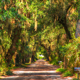 Forest Road by Keith Wood - Landscapes Forests ( kewphoto, hdr, palms, spanish moss, keith wood )