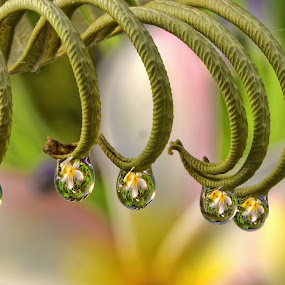 by Margie MacPherson - Nature Up Close Natural Waterdrops