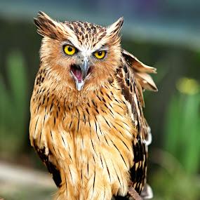 by Anugrah Fajar - Animals Birds