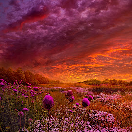 Then Ever Been Lifted Before by Phil Koch - Landscapes Prairies, Meadows & Fields ( vertical, arts, fine art, travel, yellow, love, sky, nature, weather, light, orange, trending, colors, twilight, art, mood, journey, horizon, rural, portrait, country, dawn, environment, season, serene, popular, outdoors, lines, natural, hope, inspirational, canon, wisconsin, ray, joy, landscape, sun, photography, life, emotions, dramatic, horizons, inspired, clouds, office, hdr, purple, park, heaven, camera, beautiful, scenic, living, morning, lilacs, field, unity, blue, sunset, amber, peace, meadow, summer, beam, sunrise, earth )