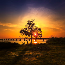 That Tree by Brennan Roche - Landscapes Sunsets & Sunrises
