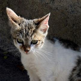 Alone by Sanjeev Kumar - Animals - Cats Kittens