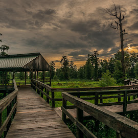 Sunrise at Phinizy Swamp  by Phillip Gandy - Buildings & Architecture Bridges & Suspended Structures ( phinizy, sony, clouds, nex6, green, wide angle, augusta, georgia, sunrise, deck, swamp )