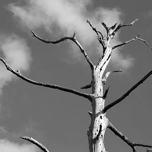 holy tree.JPG