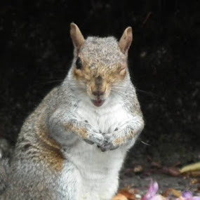 I could swear the wink is a thank you for all those peanuts  :) by Paul Rayney - Animals Other Mammals ( wink, squirrel )