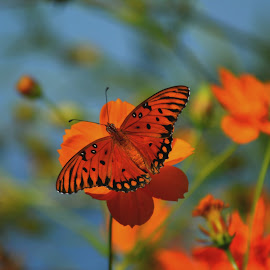 Orange on Orange by Rhonda Kay - Animals Insects & Spiders (  )