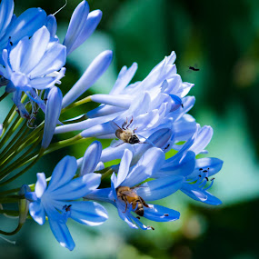 nature by John Brock - Animals Insects & Spiders ( bees, nature, nature up close, flowers, pollination,  )