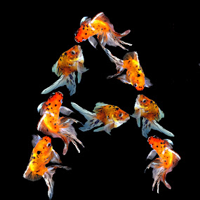 fishy A by Janna Morrison - Typography Words ( a, fish letter a, alphabet, typography, alphabets, script, b, c )