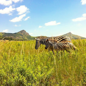 Mother & Child by Gareth  Evans - Instagram & Mobile Other ( child, sky, mother, blue, outdoors, summer, zebra, africa )