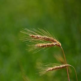 by Angela Codrina Andries Bocse - Nature Up Close Other plants