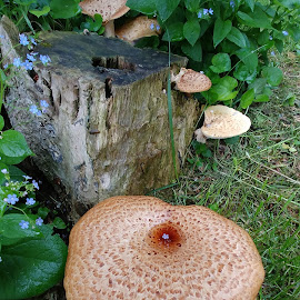 Maureen's Mushrooms by Rita Goebert - Nature Up Close Mushrooms & Fungi ( forget-me nots; mushrooms; friendship garden; may 2018,  )