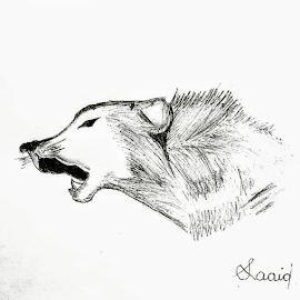 Wolf  by Saaid Shah - Drawing All Drawing ( wolf, pencils, drawing, illustration, black and white, sketch )