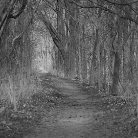 The Walk by Ann Overhulse - Black & White Landscapes