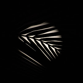 Moon by Datchina Moorthi - Abstract Patterns ( moon, abs, shadow, leaf, moonlight )