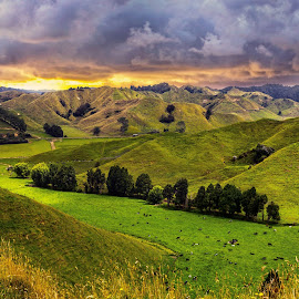 Fields at the Forgotten Highway New Plymouth by Anupam Hatui - Landscapes Prairies, Meadows & Fields ( nature, green, landscape, new zealand, fields )