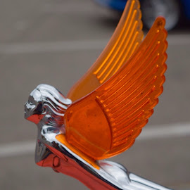 Winged Beauty  by Lorna Littrell - Transportation Automobiles (  )