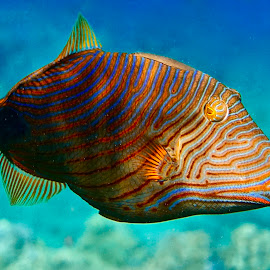 by Tatiana Gonnason - Animals Fish