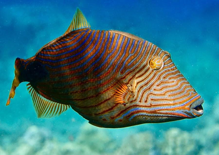 by Tatiana Gonnason - Animals Fish