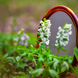Mirror, mirror ... who's the most beautiful in the country? by Mikaela Dana - Flowers Flowers in the Wild ( wildflowers, nature, outdoor, forest, nikon, flowers, garden, springtime )