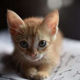 by Allama Nandi - Animals - Cats Portraits