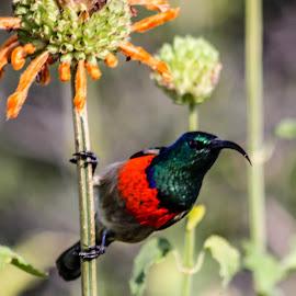 by Jan van der Schyff - Novices Only Wildlife