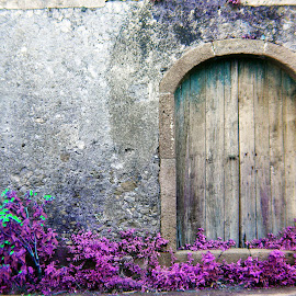 The back door by Brian Lyne - Buildings & Architecture Decaying & Abandoned ( arch, ivy, archway, stone wall, wooden doors, sicily )