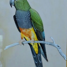 Parrot by SANGEETA MENA  - Drawing All Drawing