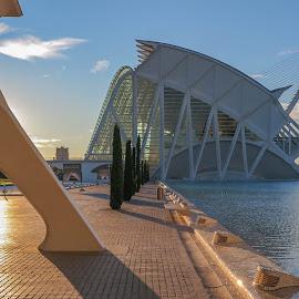 Science Museum. Valencia by Luis Felipe Moreno Vázquez - City,  Street & Park  Street Scenes ( water, buildings, architecture, valencia, museum, calatrava, spain, science )