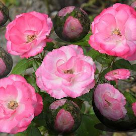digital art roses by LADOCKi Elvira - Digital Art Things