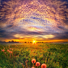 With Gratitude by Phil Koch - Landscapes Sunsets & Sunrises ( vertical, arts, travel, yellow, love, sky, nature, shadow, weather, light, trending, colors, twilight, art, mood, horizon, journey, rural, portrait, country, dandeelion, dawn, environment, season, serene, popular, outdoors, lines, natural, inspirational, hope, canon, wisconsin, ray, joy, landscape, spring, sun, photography, life, emotions, dramatic, horizons, inspired, clouds, office, heaven, seed, camera, beautiful, scenic, living, morning, earthday, field, fineart, unity, blue, sunset, peace, meadow, beam, sunrise, earth )