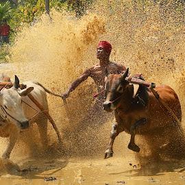 pacu jawi ku by Andriansyah Alif - Sports & Fitness Rodeo/Bull Riding