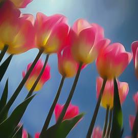 Tulips in the sun by John Kincaid - Digital Art Things