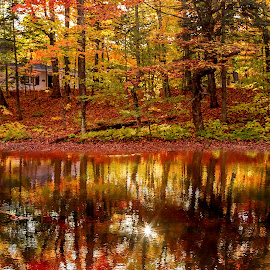 autumn colors reflected in the water by Bogdan Marin - Landscapes Forests