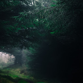 Misty morning by Hannah Rugg - Landscapes Forests ( water, wood, fog, green, branch, woodland, forest, pretty, mist )