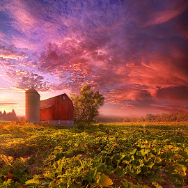 Every Dark Night Turns Into Day by Phil Koch - Landscapes Prairies, Meadows & Fields ( agriculture, pumpkins, journey, barn, farming, farm, crops, travel,  )