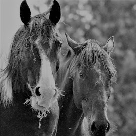 Best Friends by Linda    L Tatler - Black & White Animals (  )