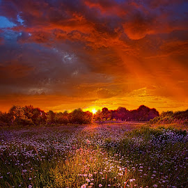 Out on the Edge of Day by Phil Koch - Landscapes Sunsets & Sunrises ( vertical, arts, fine art, travel, yellow, love, sky, nature, weather, light, orange, trending, colors, twilight, art, mood, journey, horizon, rural, portrait, country, dawn, environment, season, serene, popular, outdoors, lines, natural, hope, inspirational, canon, wisconsin, ray, joy, landscape, spring, sun, photography, life, emotions, dramatic, horizons, inspired, clouds, office, hdr, purple, park, heaven, camera, beautiful, scenic, living, morning, lilacs, field, unity, blue, sunset, amber, peace, meadow, beam, sunrise, earth )