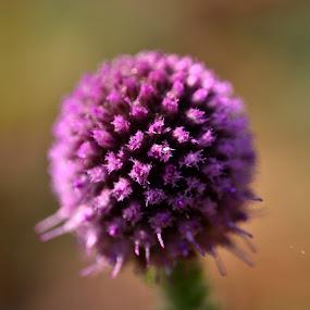 A hidden beauty... by Prasant Kumar - Nature Up Close Flowers - 2011-2013 ( plant, macro, nature, violet, blur, closeup, flower )