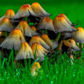 by Bojan Bilas - Nature Up Close Mushrooms & Fungi