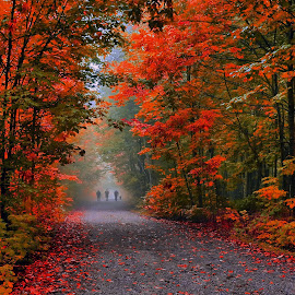 morning walk by Andrzej Pradzynski - Landscapes Forests ( fall leaves on ground, walking, fog, autumn, fall, forest, people, lane )