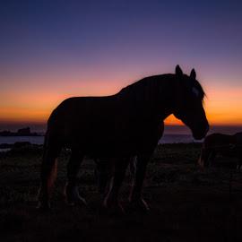 sunset by Ronan Salou - Animals Horses ( bord de mer, crépuscule, sunset, horse, bretagne, cheval, soir, landscapes, animaux, coast )
