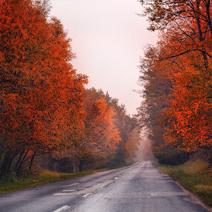 jesen madarska1.jpg