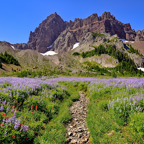 Three Fingered Jack from Canyon Creek Meadows by Gordon Banks - Landscapes Mountains & Hills ( oregon, wildflowers, mountain, volcano, three fingered jack, lupine, indian paintbrush )