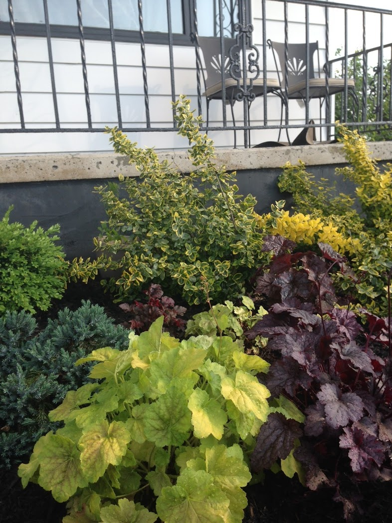 perennial garden plan evergreen shrubs layer 2 pretty. Black Bedroom Furniture Sets. Home Design Ideas