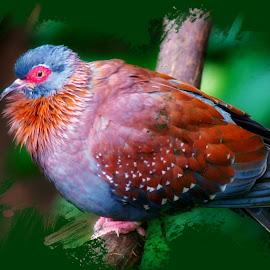 Beautiful Colors by Dave Walters - Digital Art Animals ( atlanta trip, colors, digital art, artistic, birds, atlanta zoo )
