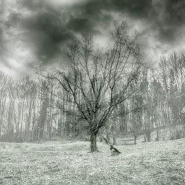 .... by Laurentiu Barbu - Nature Up Close Trees & Bushes ( clouds, nature, tree, fog, black and white, forest, leaf, landscape, leaves, close up, crowd, rain, gate )