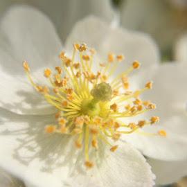 Macro flowering bush by Virginia Howerton - Nature Up Close Trees & Bushes