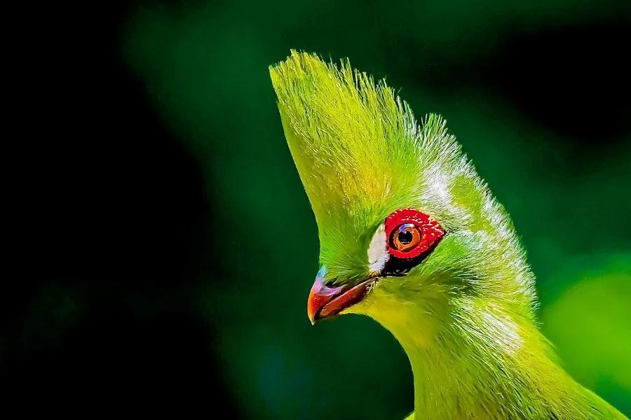 Spiked Up by Ken Nicol - Animals Birds (  )