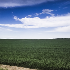 Spring Wheat Field  by Julie Wooden - Landscapes Prairies, Meadows & Fields ( field, farm, wheat field, wheat, isolated, partly cloudy, north dakota, nature, hebron, green, outdoors, meadow, scenery, landscape, spring,  )
